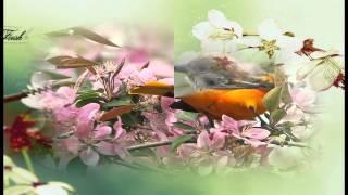 Бах Скерцо (Красивые птицы)