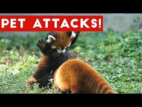 Funniest Animal Attacks Compilation April 2017 | Funny Pet Videos