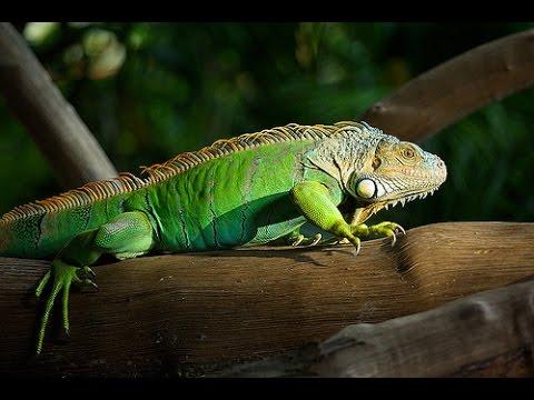 sự nguy hiểm của loài bò sát -  the dangers of reptiles