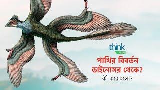 ডাইনোসর থেকে পাখি কী করে এলো? | How did birds evolve from dinosaurs? | Think Bangla