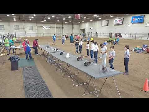 4-H Rabbit Show at 2020 Lancaster County Super Fair