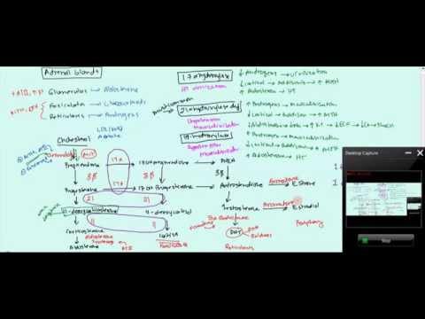 05 Adrenal Glands (Anatomy, Biochemistry, Congenital Adrenal Hyperplasia Mnemonic)
