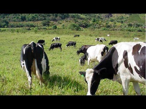 Curso Manejo Sanitário de Bovinos para Produção Orgânica de Leite - Berno