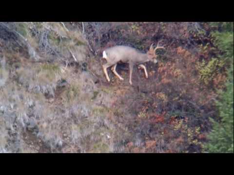 Buck 808 yard shot by Kevin Calhoun / 7mm Remington Magnum