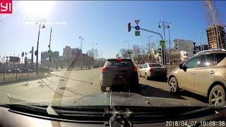 Случайный видеорегистратор снял погоню двух ворон за белочкой