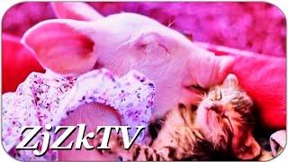 Приколы с животными самые свежие и лучшие №137. Одна сися на двоих! Fun with animals #137