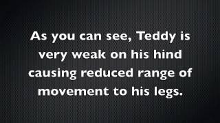 Top Dog Hydrotherapy Newbury - Teddy Rehabilitation
