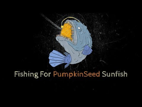 Destroying Some Pumpkin Seed Sunfish - These Aren't Bluegill?