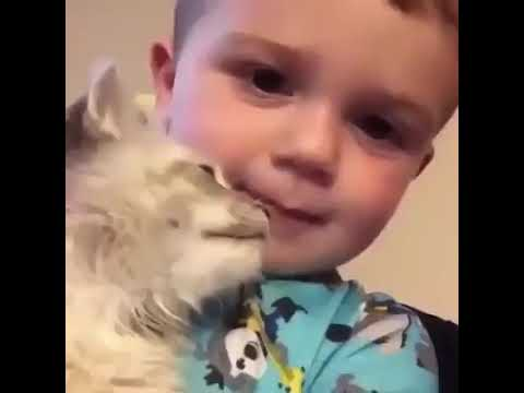funny baby .with a cat, cute cat .funny baby boy.