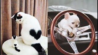 Download Cute baby animals Videos Compilation cute moment of the animals - Soo Cute! #6 Mp3 and Videos