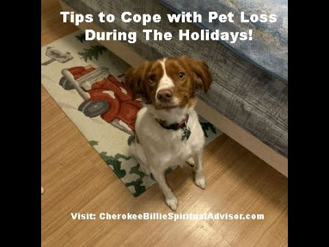 tips-to-cope-with-pet-loss-during-the-holidays!