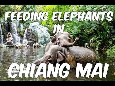 MY DAY WITH ELEPHANTS IN CHIANG MAI - THAILAND (AN AWESOME DAY)