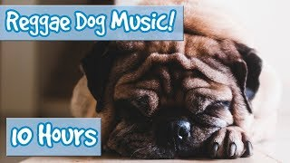 Doggy Reggae! Reggae Music for Dogs to Calm Anxiety and Stress! Stop Hyperactivity and Soothe Dogs!