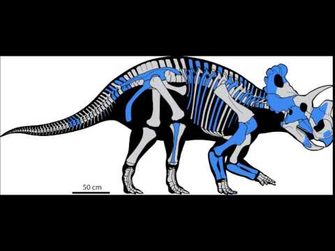 CAW Dinosaur Discussion Ep. 21: - Wendiceratops Pinhornensis