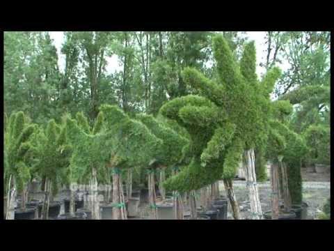 Bountiful Topiary