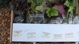 Пришла посылка с растениями  Что делать с саженцами