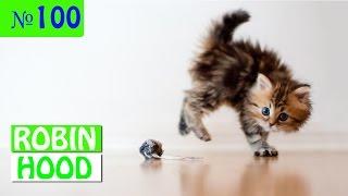 ПРИКОЛЫ 2017 с животными. Смешные Коты, Собаки, Попугаи // Funny Dogs Cats Compilation. Май №100