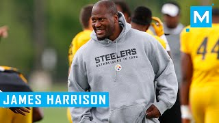 James Harrison Strength Training Workouts for Football | Muscle Madness