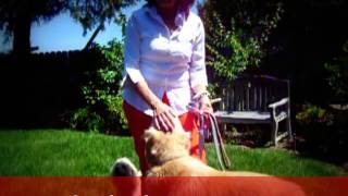 Dog Loose Leash Training By Save A Rescue
