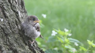 Raising a Baby Bird: The Story of Little Birdy