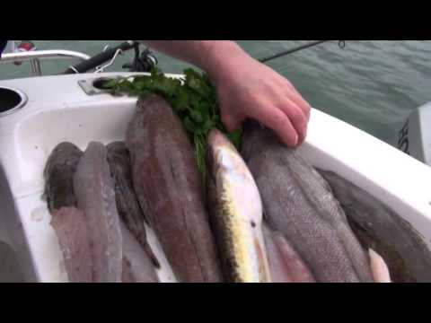 The Australian seafood Episode 3