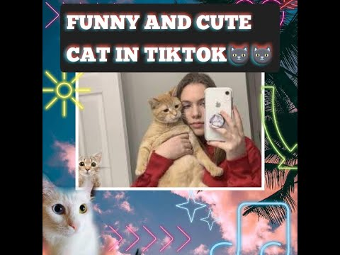 Funny and cute cat moments/tiktok compilation 2020
