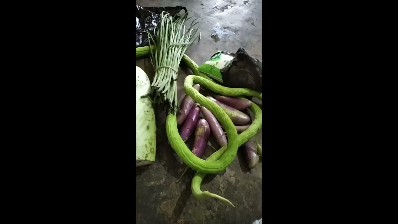 Adbhut, avishwasniya, akalpaniya... miracle had happened in our village. sasural vlog