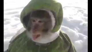 Смешая обезьяна Ваня ест снег   Смешное видео!(Смешные кошки и животные, Забавные Кошки, Забавные животные, смешной, Забавные животные сборник, Смешной..., 2014-07-31T16:51:31.000Z)