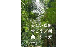 YouTube動画:美しい森をすごす/新曲『シュガー』
