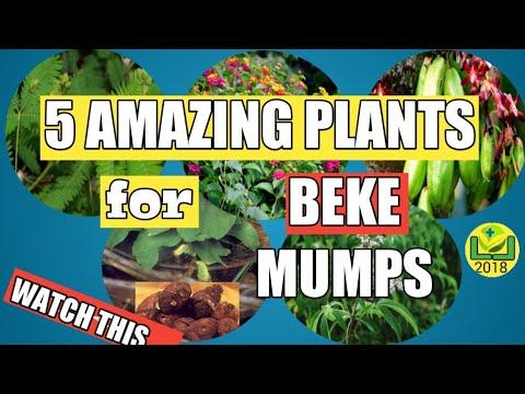 #214 LIKAS LUNAS| 5 Amazing plants para sa Beke(mumps) #Herbalmedicine