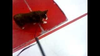 Agility Dog Training - The Ramp!