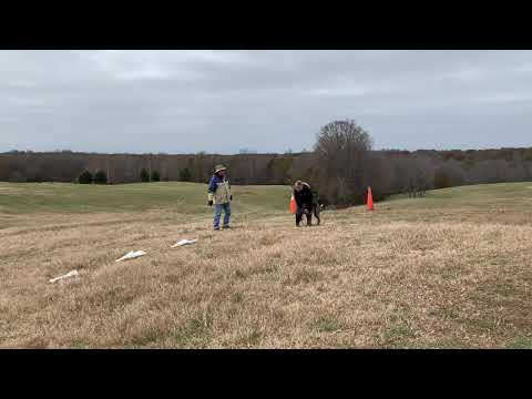 First Lure Coursing Practice