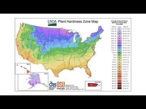 Plant Hardiness Zones | From the Ground Up