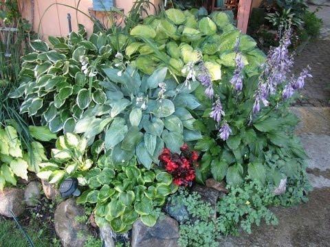 огород и сад фото