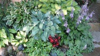 Сад и огород и Дача. Красивый цветник. Дизайн клумбы.