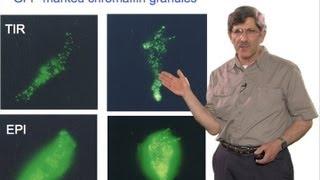 Microscopy: Total Internal Reflection Fluorescence (TIRF) Microscopy (Daniel Axelrod)