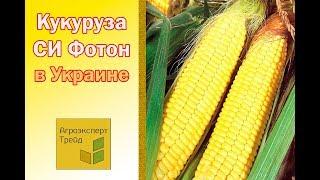 Кукуруза СИ Фотон в Украине