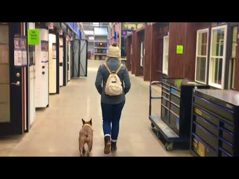 2 Year Old Australian Cattle Dog | Best Heeler Dog Training Oklahoma | Board and Train