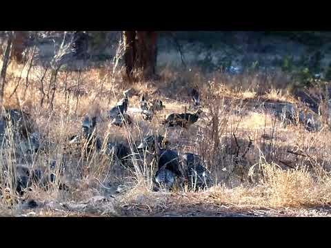 Colorado wild turkeys winter behavior - sunset approaching