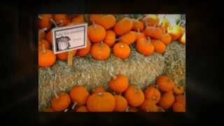 Pumpkins & Fall Harvest, Boulder County