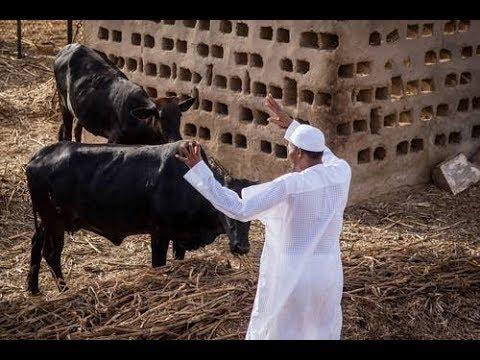 Muhammadu  Buhari 15th President of Nigeria Biography*Family*Income*Cars*Plane *Houses