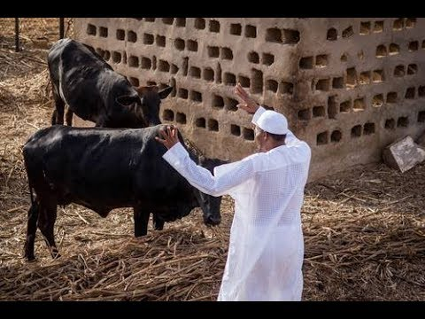 Muhammadu  Buhari 15th President of Nigeria Biography*Family*Income*Cars*Plane *Houses thumbnail