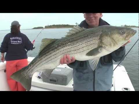 Boston Harbor Striper Fishing With Bill And Jules