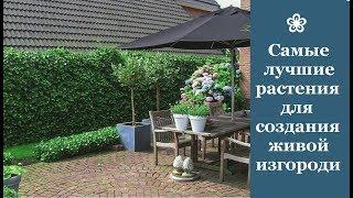 видео Живой бордюр из растений на даче своими руками.