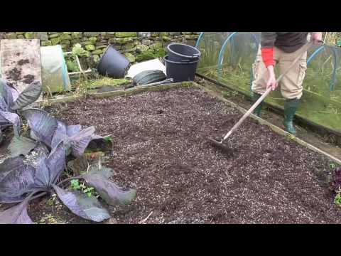 Allotment Diary : No More Digging for Me : My No Dig Method