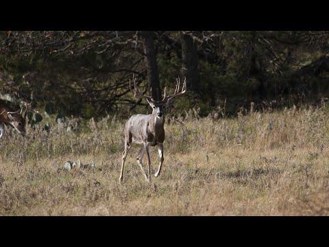 Whitetail Archery Hunt - December 2018