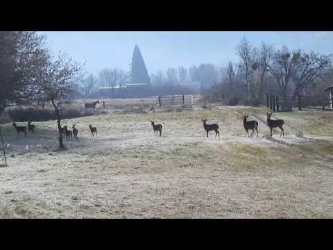 A Herd of Deer - Ashland, Oregon
