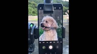 스마트폰 고배율 망원경…