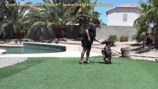 Motivation Dog Training Method