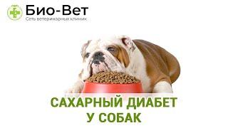 Сахарный диабет у собак. Ветеринарная клиника Био-Вет.